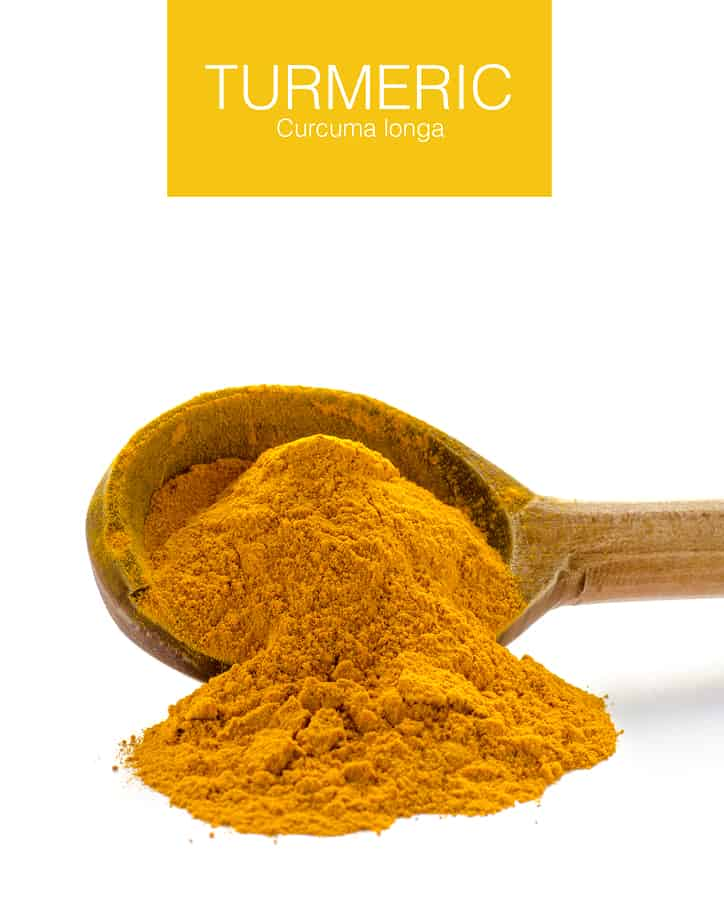 Turmeric and Curcumin