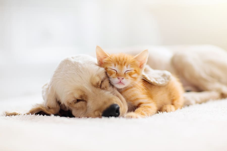 concept of sleep, kitten and puppy